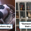 30 Idiots Who Prove They Don't Deserve To Become Pet Owners At All