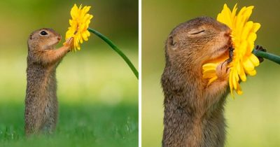 Photographer Captures Treasurable Moments Of Nature When No One's Around