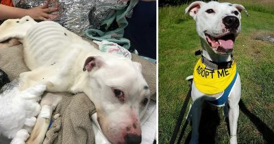 Abandoned Dog described As 'Thinnest Dog Seen Alive' Is Seeking For New Home