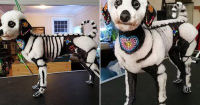 Owner Slammed For Decorating Dog To Look Like A Skeleton During A Festival
