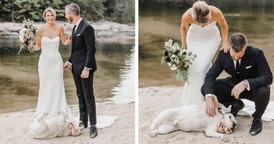 Dog Hilariously Refused Taking Owners' Wedding Day Serious, Stole The Whole Event
