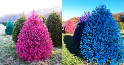 Rainbow Christmas Trees Are Now Available To Make Your Celebration Super Colorful