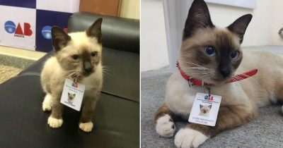 People Filed Complaints About A Stray Kitty Roaming This Law Firm So They Hired Him