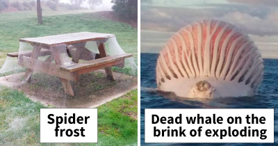 40 Pictures Show That Australia Is The Land Of 'NOPE'