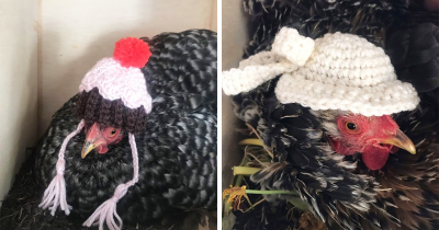 30 Chickens Ready For The Fall With Their Pint-Sized Knitted Outfits
