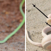 People are doodling arms on these snakes and now they look cute!