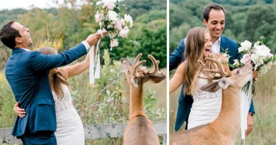 Wedding Photo Session Gets Disrupted By A Deer, Resulted In 15 Hilarious And Adorable Pics