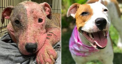 Amazing Recovery Of Dog Which Was Found Buried Alive On Hawaii Beach