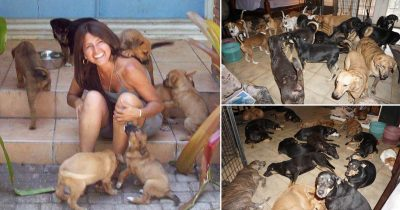 Woman Shelters 97 Dogs In Her Home During Hurricane