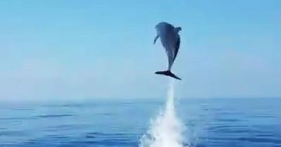 Fisherman Releases Baby Dolphin And Gets Amazing Thanks By Mother Dolphin