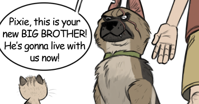 Hilariously Adorable Comics About A Little Kitten And Ex-Military Dog