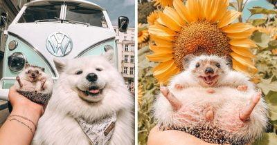 World's Happiest Hedgehog Wins 1.5m Followers On Instagram