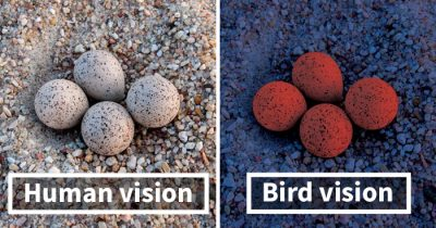 Here's How Birds See The World As Compared To Humans And It's Pretty Astonishing