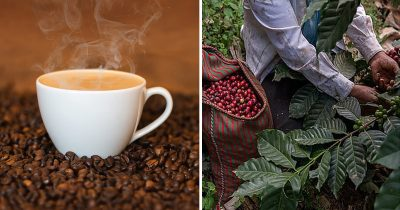 World Could Soon 'Run Out Of Coffee' Due To Global Warming