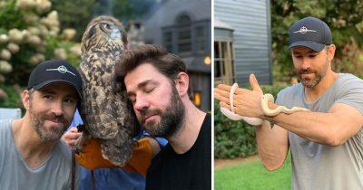 Ryan Reynolds Shares Pics With Animals And Still Hilariously Troll John Krasinski