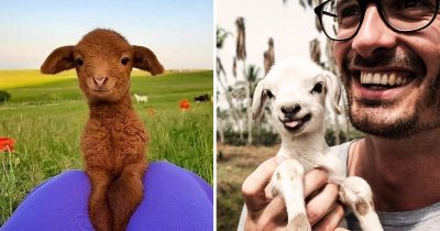 30 Happiest And Cutest Baby Goats That Will Make Your Heart Flutter And Day Better