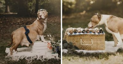 This Pit Bull Got Her Own Maternity Photoshoot And She Looked Absolutely Radiant