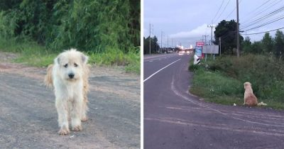 Lost Dog Waits 4 Years In The Same Spot Until He Gets Reunited With Owners