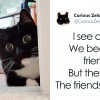 Zelda The Cat Took Over Twitter With Her Cute And Hilarious Daily Life Tweets