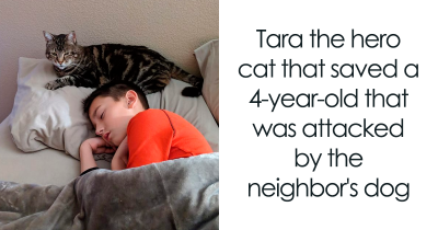 24 Times Cats Surprised Us With Their Acts Of Heroism