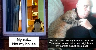 30 Hilarious Cat Snapchats That Will Leave You Smiling All Day
