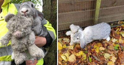 Rescuers Found An Abandoned Bunny Clinging To His Teddy Bear