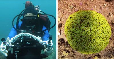 Scientists' New Algorithm That Can Remove Color Distortion From Underwater Images