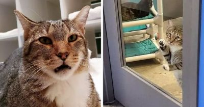 This Cat Was Locked In Solitary Confinement For Letting Other Shelter Animals Out
