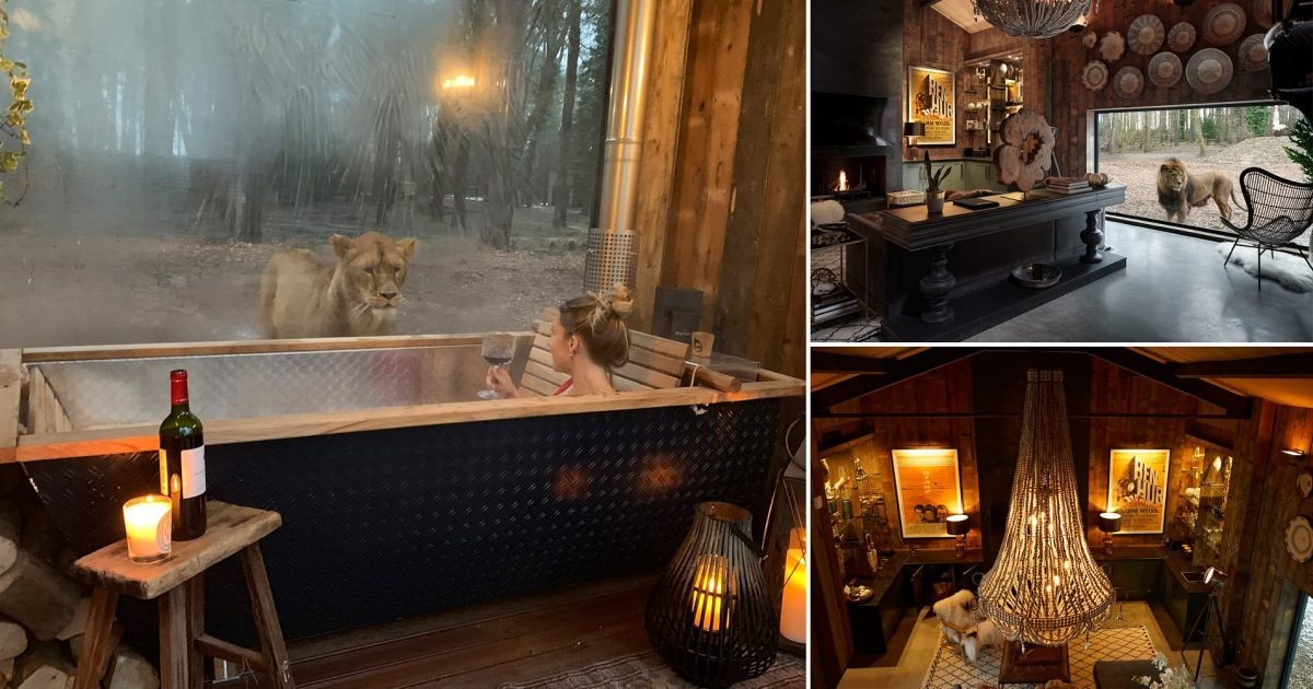This Safari Park Lodge Offers People To Sleep Next To Lions
