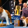 Thor The Bulldog Won 'The Best In Show Award' At The National Dog Show