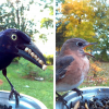 Woman Set Up Feeder Cam For Birds In Her Yard, And The Results Are Amazing