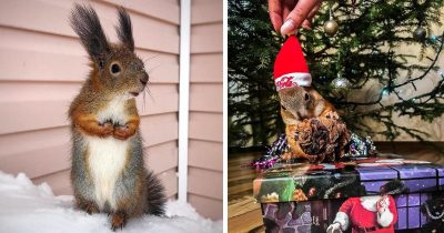 Guy Found Baby Squirrel That Can't Even Walk, Took It Home As A Pet And Now They're Best Friends