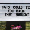 30 Hilarious Cat Puns Vet Clinics Put Up On Their Signs
