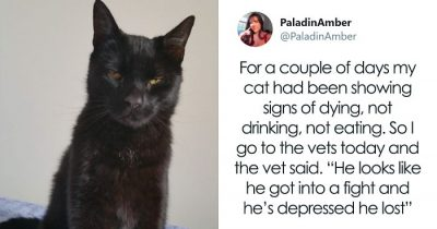 People Share Hilarious Stories About The Moments They Thought Their Pets Were Dying