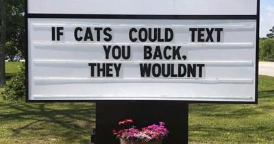 30 Hilarious Cat Puns Vet Clinics Put Up On Their Signs