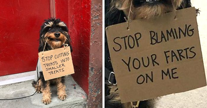 Dog Protests Annoying Daily Life Things With 12 Hilarious Signs