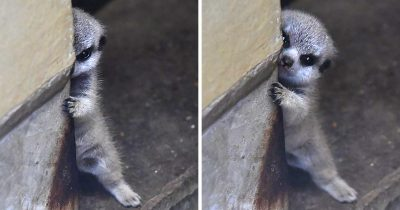 23 Shy Animals That Make Us Want To Hug Them