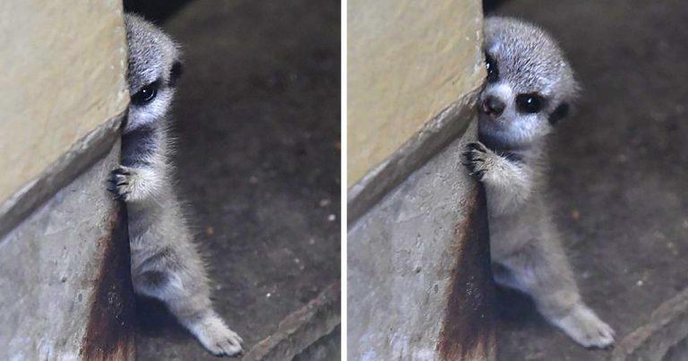 23 Shy Animals That Make Us Want To Hug Them