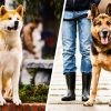 15 Dog Breeds Are The Most Loyal Of Them All