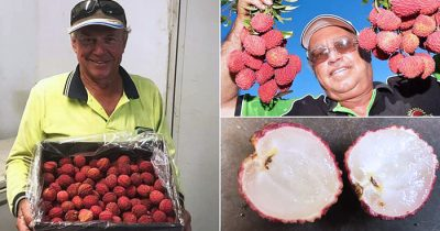 Farmer Successfully Grows First Ever Seedless Lychees After 20 Years Of Hard Work