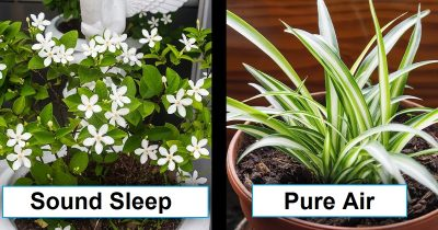 15 Houseplants That Will Help With Improving Your Family's Health