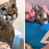 Rescued Puma Who Can't Be Released Into The Wild Is Presently Living As A Spoilt House Cat