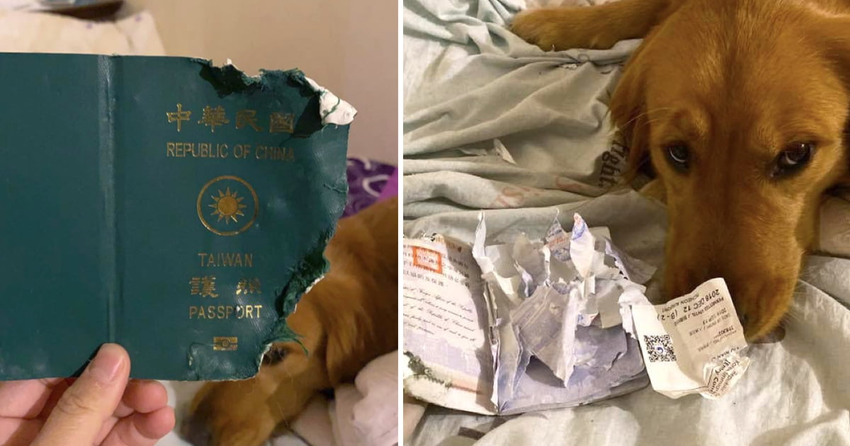 Dog Stopped Owner From Going To Wuhan By Destroying Her Passport
