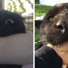 Panthers Are Just XXXL Sized Black Cats And These 16 Comparison Pics Prove It