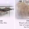 This Rat Sanctuary Shames The Naughtiest Rats Of February And Their Crimes Are Too Hilarious