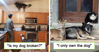 30 Hilarious Dog Snapchats That Are Impawsible Not To Laugh-Out-Loud