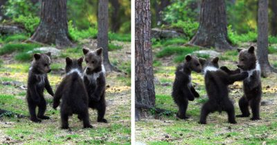 Teacher Stumbled Upon Baby Bears 'Dancing' In Finland Forest, Thinks He's Visualizing Them