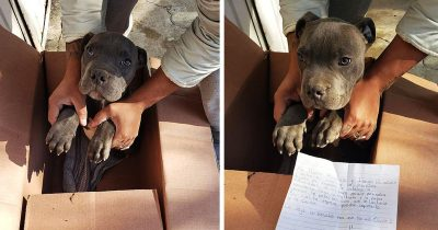 Boy, 12, Leaves Beloved Puppy Outside Shelter To Save It From His Abusive Father