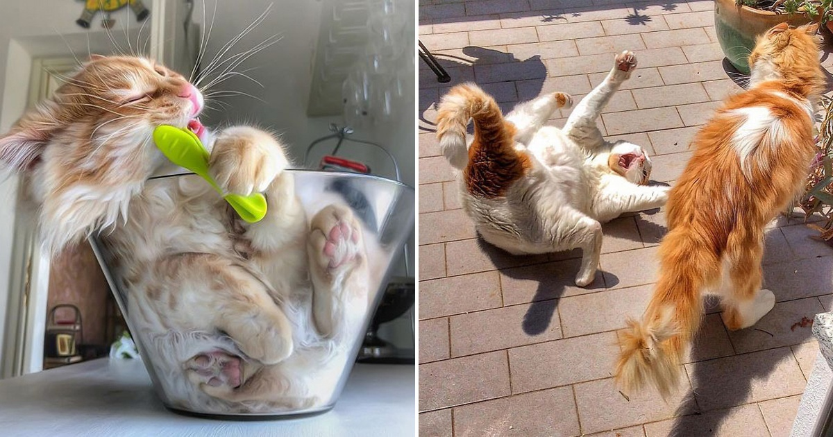 Italian Woman Captured The Carefree Daily Life Of Her Cat And It's Making People Jealous