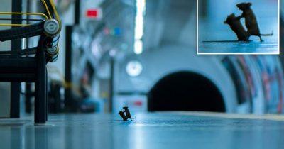 Amazing Photo Of Two Mice Fighting On A Tube Platform Wins Wildlife Photography Award